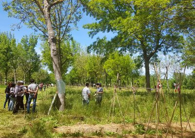agroforesterie et maraîchage