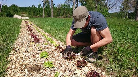 recherche agroforesterie
