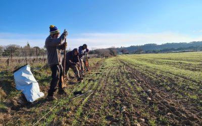 Chantier de plantation aux Terres de Jeanne