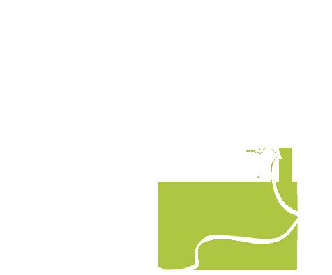 de l'Occitanie à Rhône-Alpes pour le parrainage d'arbres